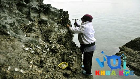 Khai thác hà biển