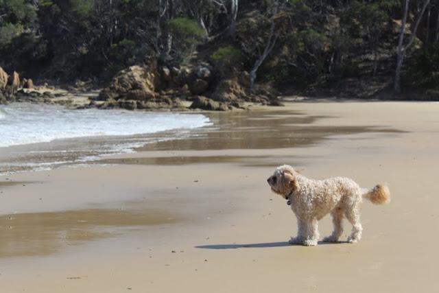 Cocora Beach Eden