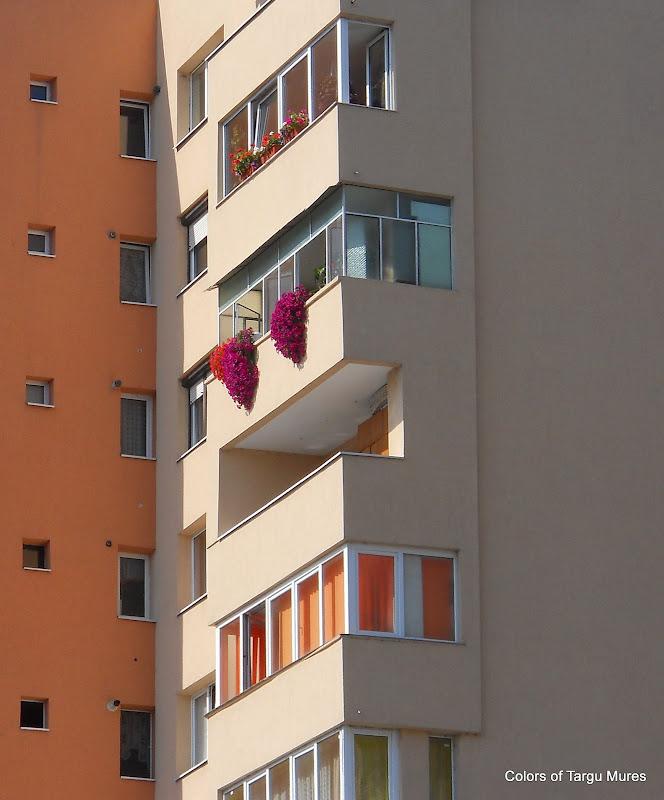 Flori la ferestre
