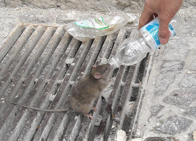 dare bere agli assetati