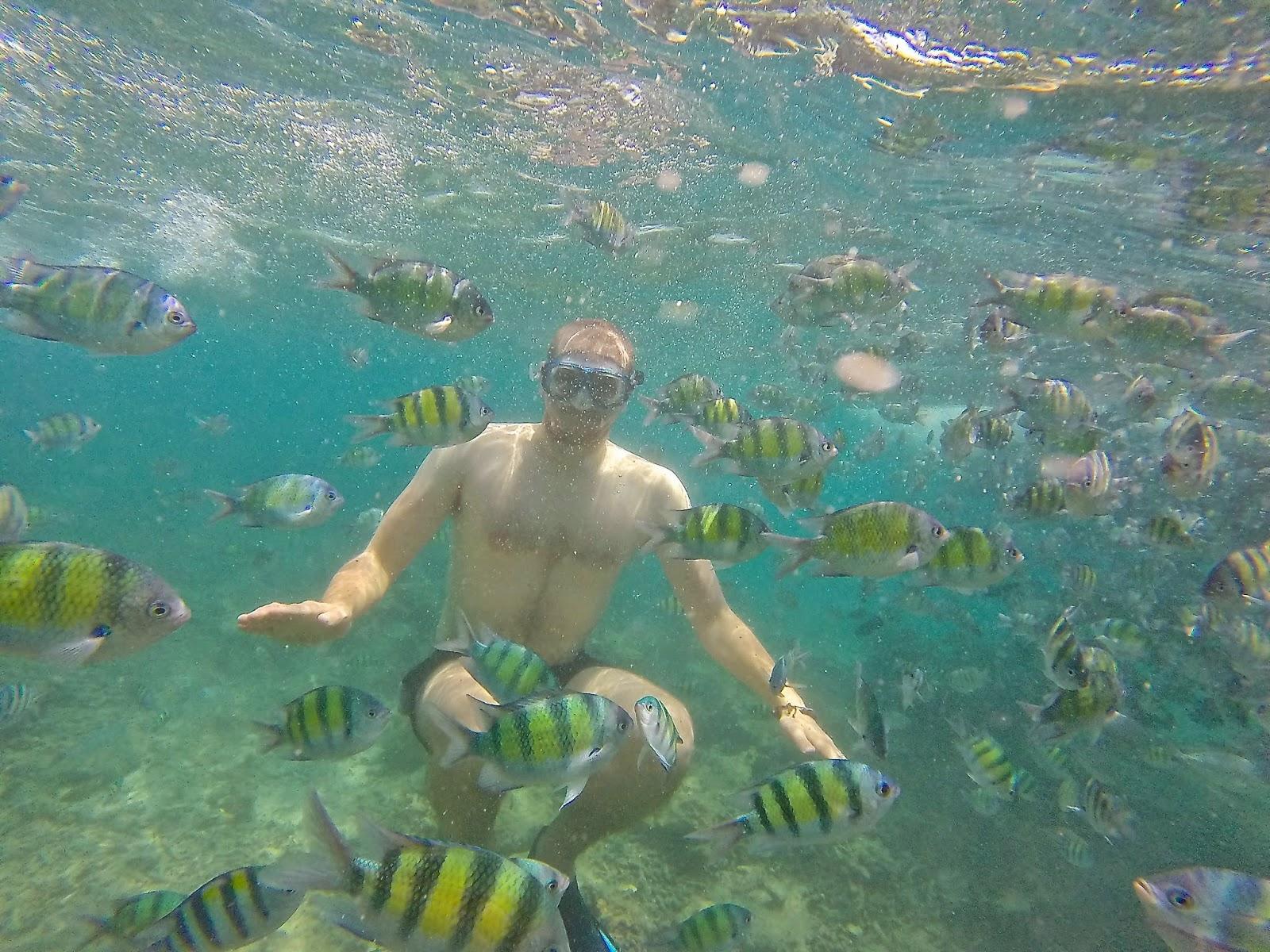 Koh Phi Phi snorkling