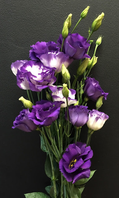 Lisianthus - Stein Your Florist Co.