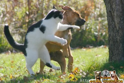 cats vs dogs as pets Play cat vs dog for free online at gamesgamescom select 1 of the 4 special items and throw bones over the fence to hit the cat.