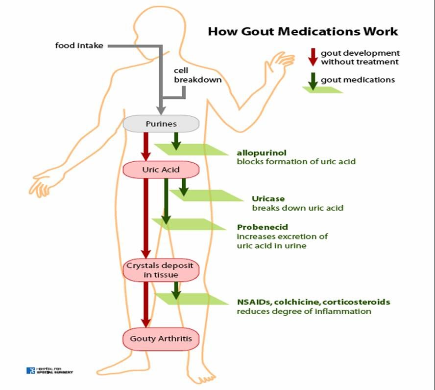 Uric Acid Pathway HEALTH FROM TRU...