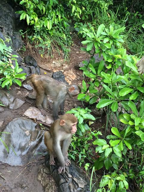 wisata, Ha Long Bay, Hanoi,Vietnam,monyet
