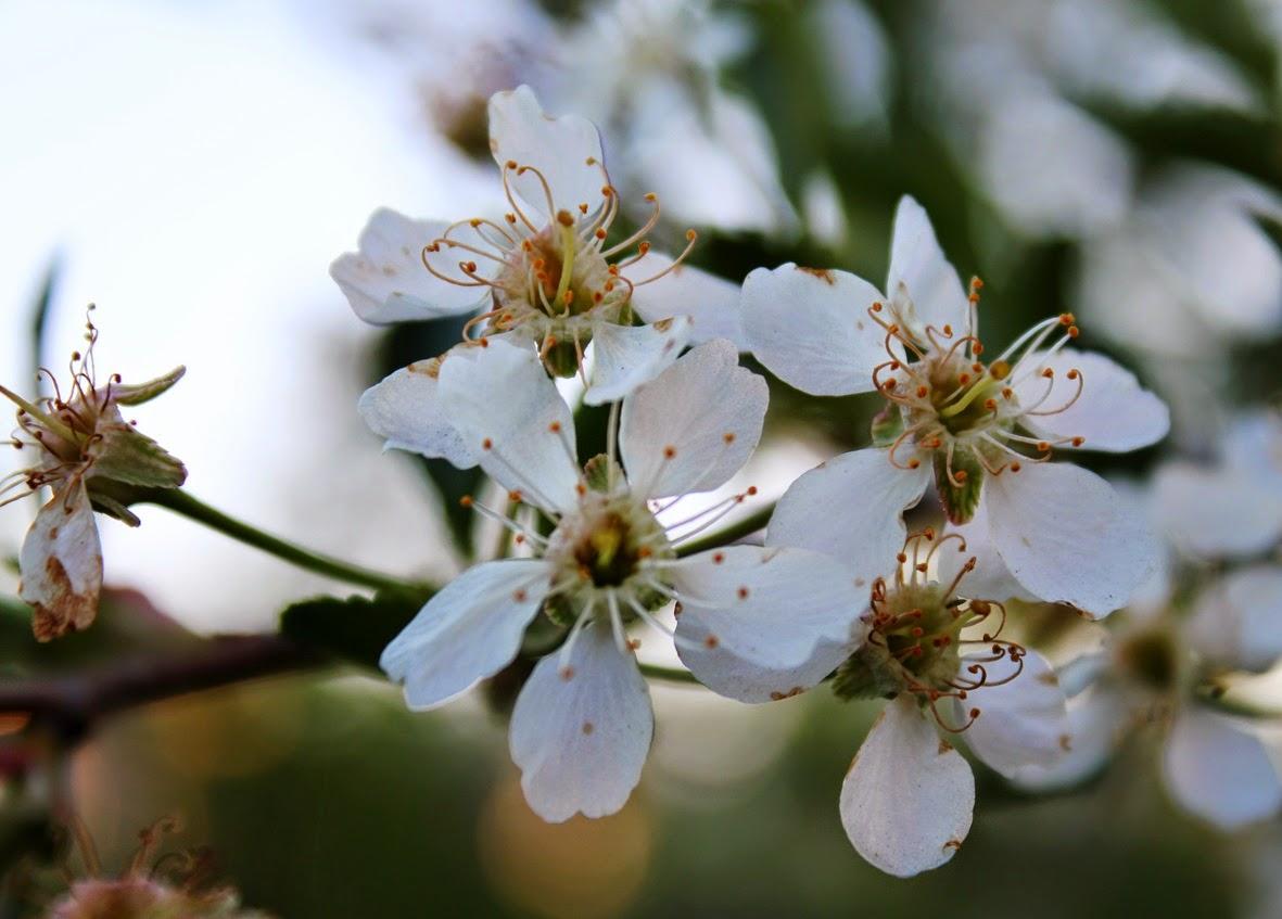 цветение лета