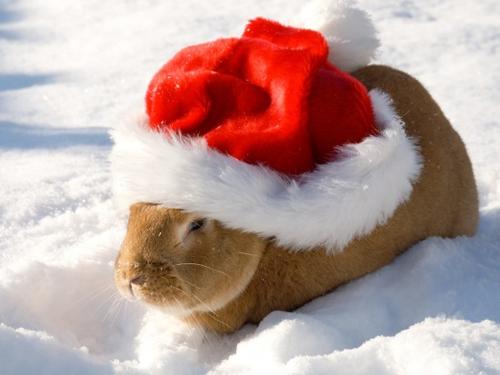 Cute christmas animals - photo#9
