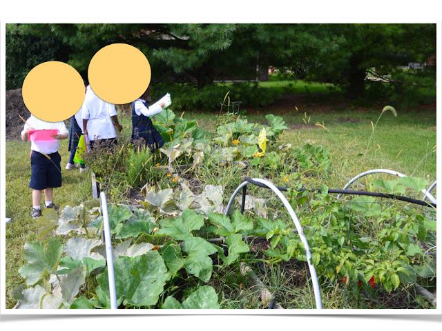 https://www.teacherspayteachers.com/Product/Garden-Discovery-Fun-In-the-Garden-or-the-Schoolyard-1326807