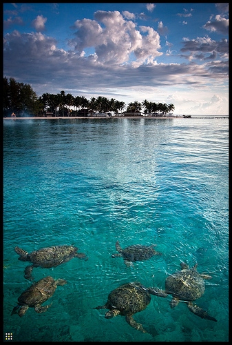 Akses ke pulau derawan