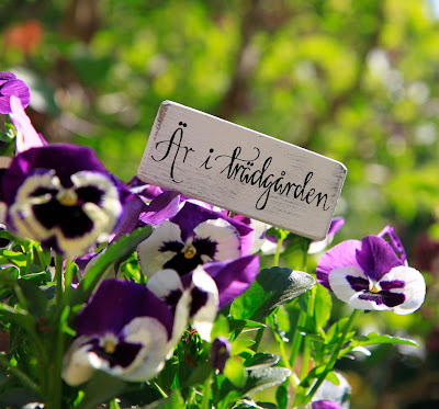 Trädgård inspiration blogg