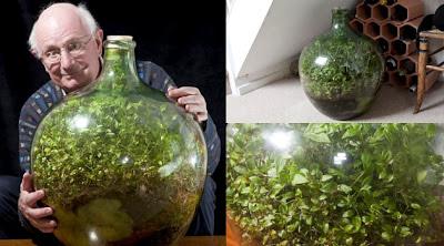 http://www.opoae.com/2013/02/tanaman-ini-telah-berumur-40-tahun.html