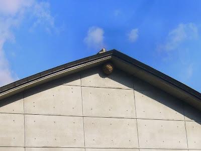 大阪府交野市・大阪市立大学 理学部付属 植物園 スズメバチの巣