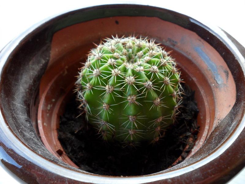 Pasi n por las plantas mi colecci n de cactus mix de pinchos for Nombres de cactus