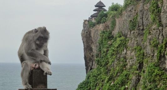 Bali Holy Monkey Forest Temple - Bali, Holidays, Tours, Attractions