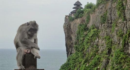 Pura Hutan Kera Suci Uluwatu - Pecatu, Badung, Denpasar, Bali, Liburan, Wisata, Restoran, Atraksi, Objek Wisata