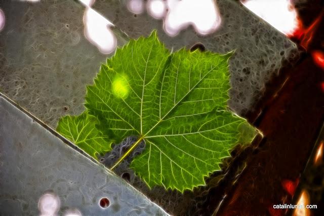 Fractalius Leaf