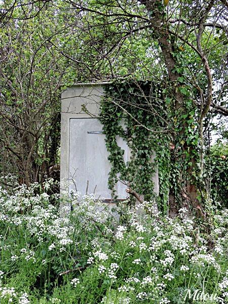Mitou la bretonne tout au fond du jardin il y a - Laurent gerra la cabane au fond du jardin ...