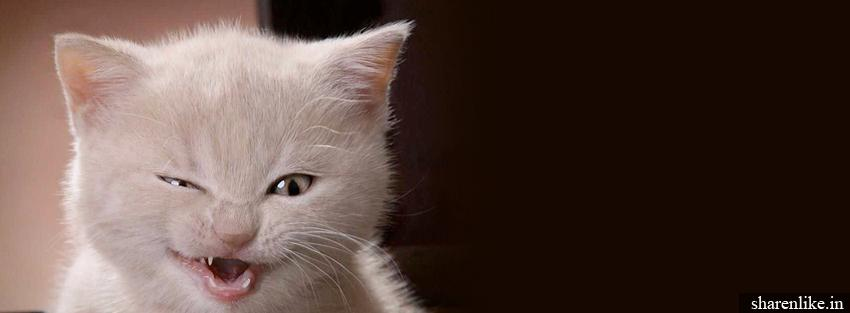 white cat | lovely fb cover