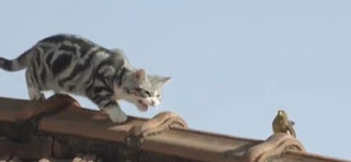 Só Whiskas faz o seu gato descer do telhado