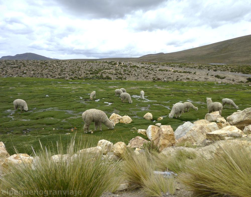 Arequipa Valle de Colca