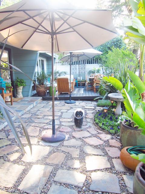 dog in backyard under an umbrella