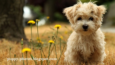Puppy Dog Breeds Photos