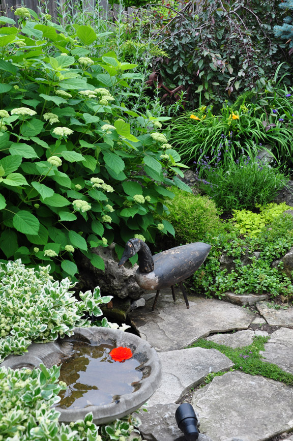 Three dogs in a garden pin ideas small water features for Small garden feature ideas