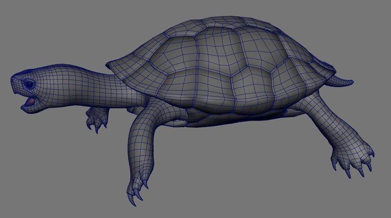 http://1.bp.blogspot.com/-nzv4mw22CW8/TqHRwDs3yII/AAAAAAAABeg/ulRf3LiFiQY/s1600/turtleWire.jpg