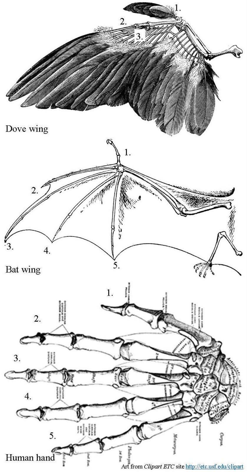 Wild Birds Unlimited: Do Birds Have Thumbs?