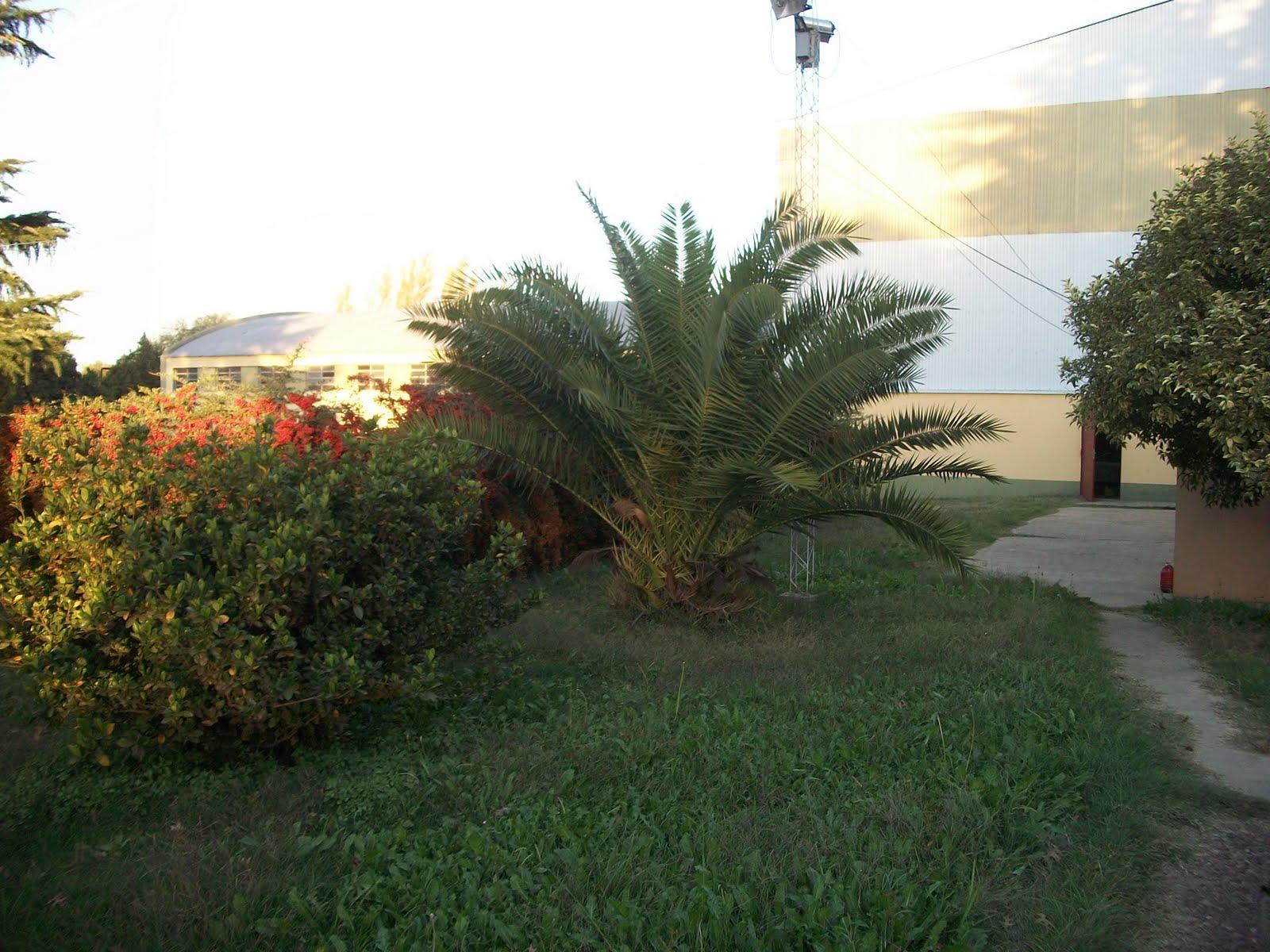Casas antiguas la palmera de mi jardin for Casas mi jardin