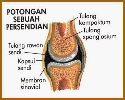 penjagaan sendi lutut