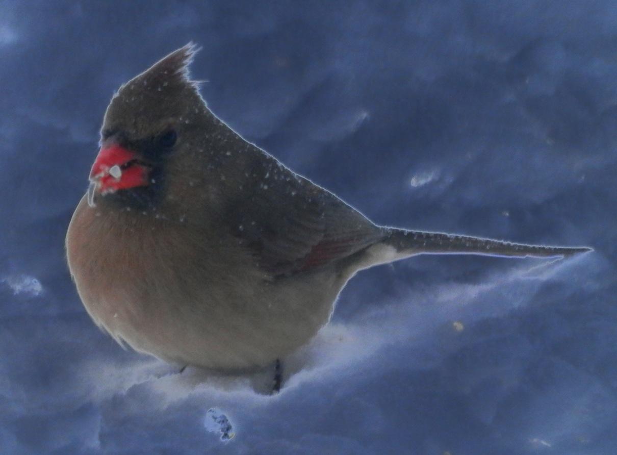 wildbirds broadcasting march 2013
