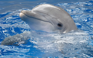Dolphin Water HD Wallpaper