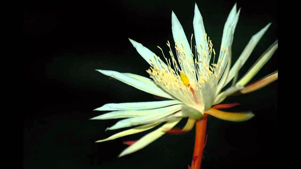 Cuales Son Las Flores Más Caras Del Mundo