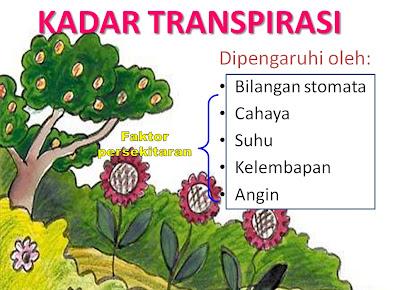 faktor yang mempengaruhi kadar transpirasi