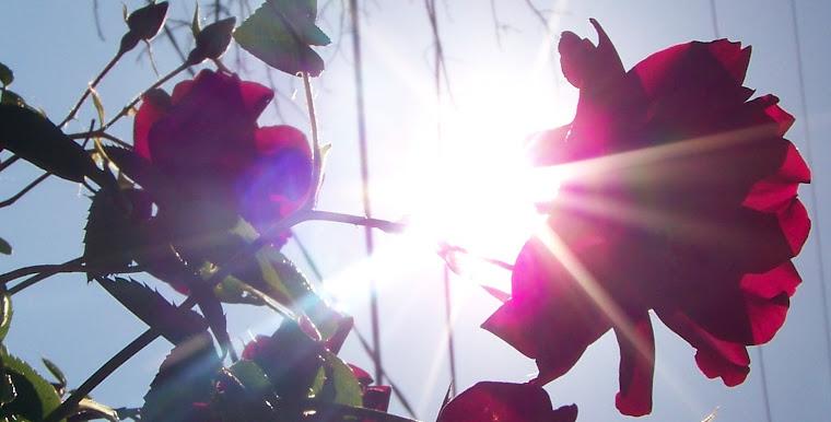 Reinhardt Rose Garden