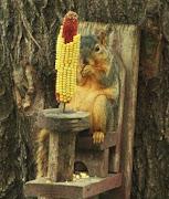 śmieszne zwierzęta wiewiórka smieszne zwierzeta wiewiorka