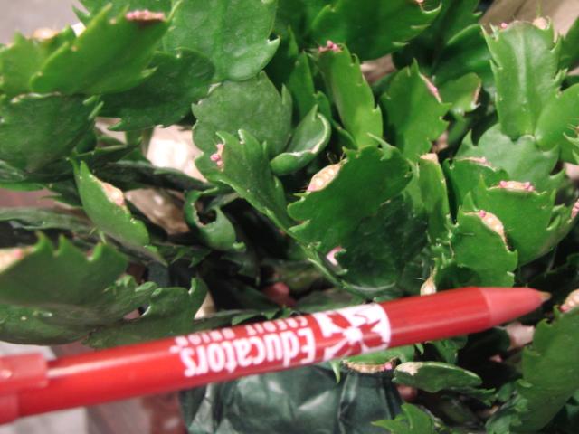 Ap Bio Blog 2012