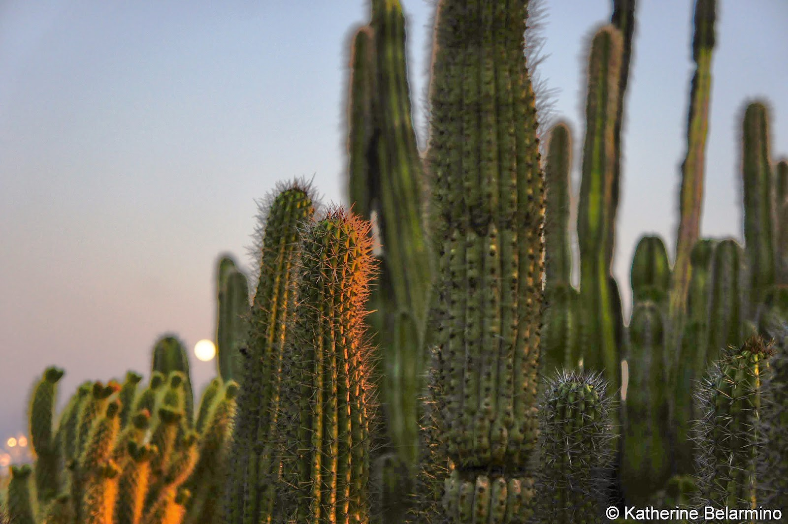 Desert Botanical Garden Sunset Phoenix Arizona