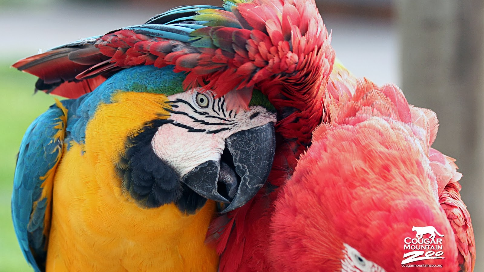 best friend macaws