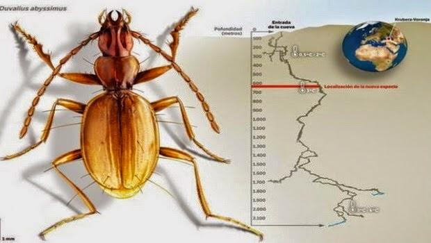 Spesies baru Serangga Berhasil Ditemukan