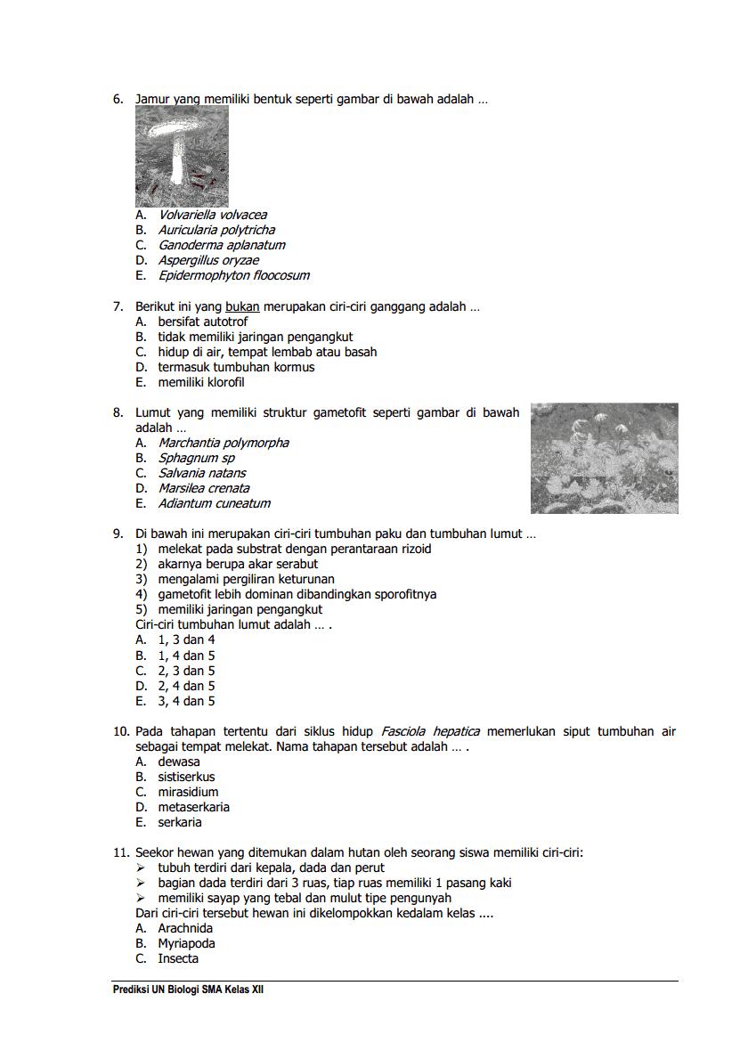 Soal Biasa 02 Biologi 2014 Materi Biologi