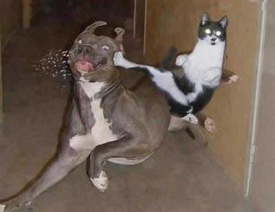 funny+pics+of+animals+%28192%29.jpg