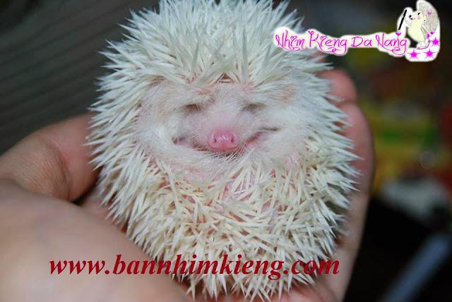 http://www.bannhimkieng.com/2013/11/gia-cac-loai-nhim-kieng-tai-nhim-kieng.html