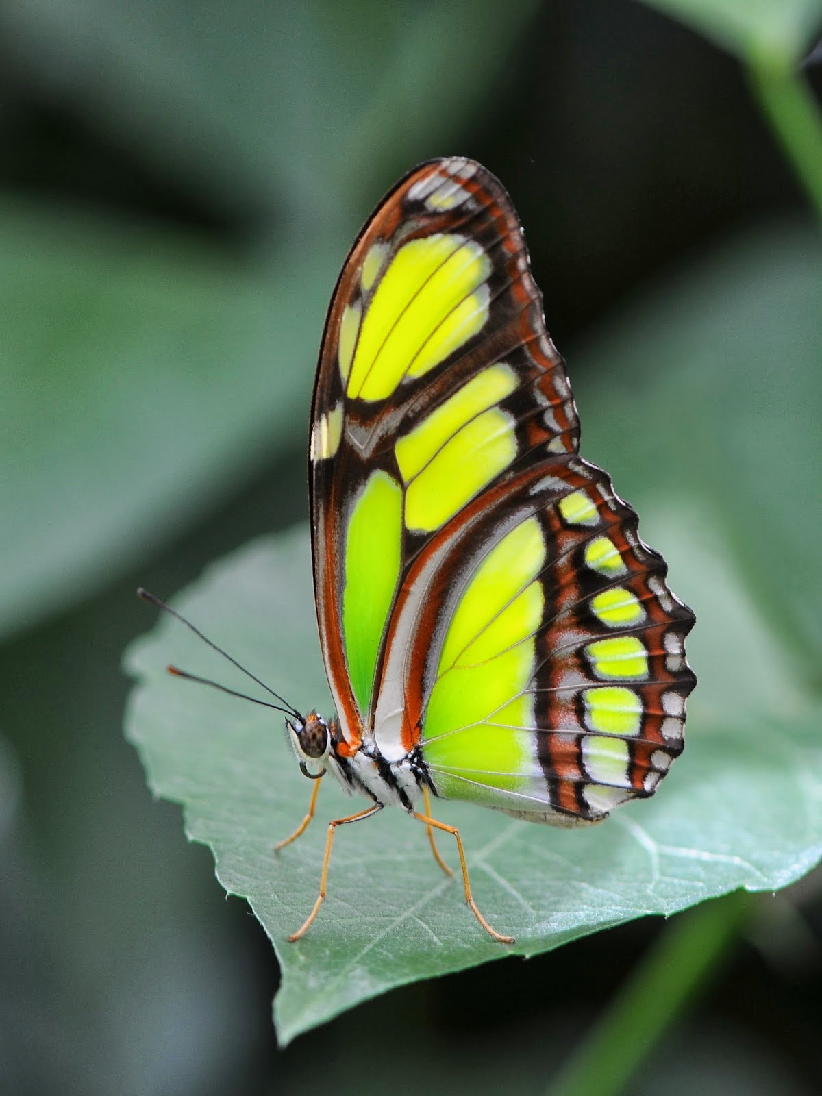 Blok888: Top 10 Most Beautiful Butterflies in the world 10 Most Beautiful Butterflies