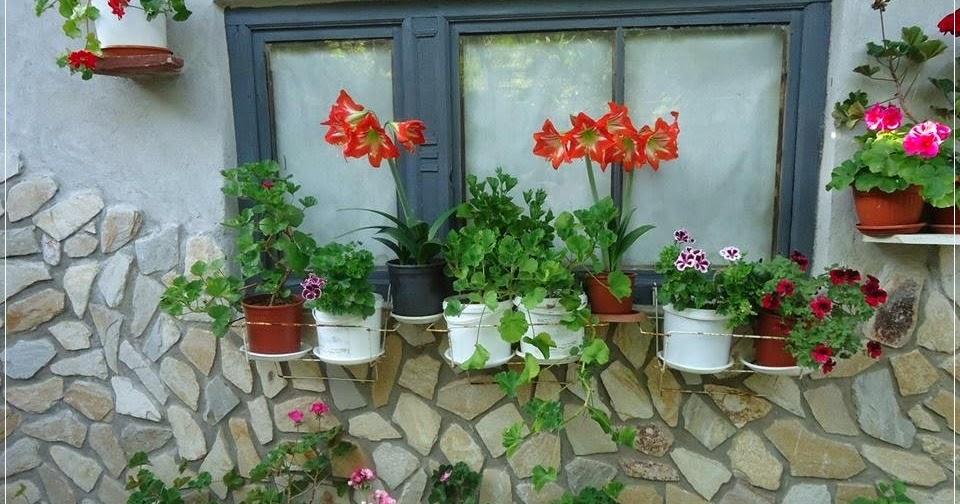 Savjeti za cvijeće i zelenilo na balkonu i prozoru - Moj Vrt Cvijeća