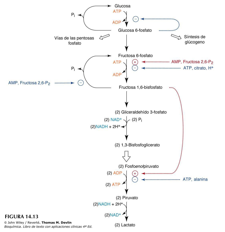 ciclo de esteroides para masa muscular principiantes