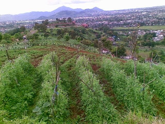jual tanah di jalur puncak 2
