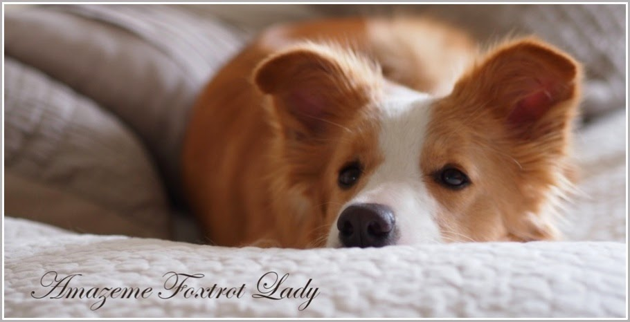 Amazeme Foxtrot Lady