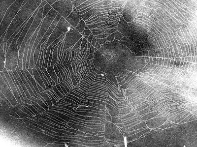 capture spider web on paper